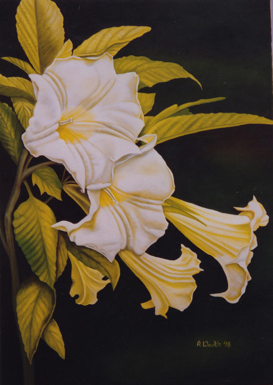 Datura/Stechapfel   1997       50 x 70 cm