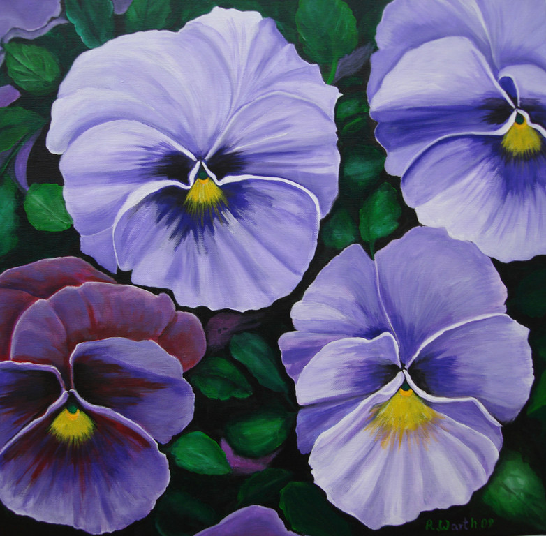 Stiefmütterchen  2009        50 x 50 cm