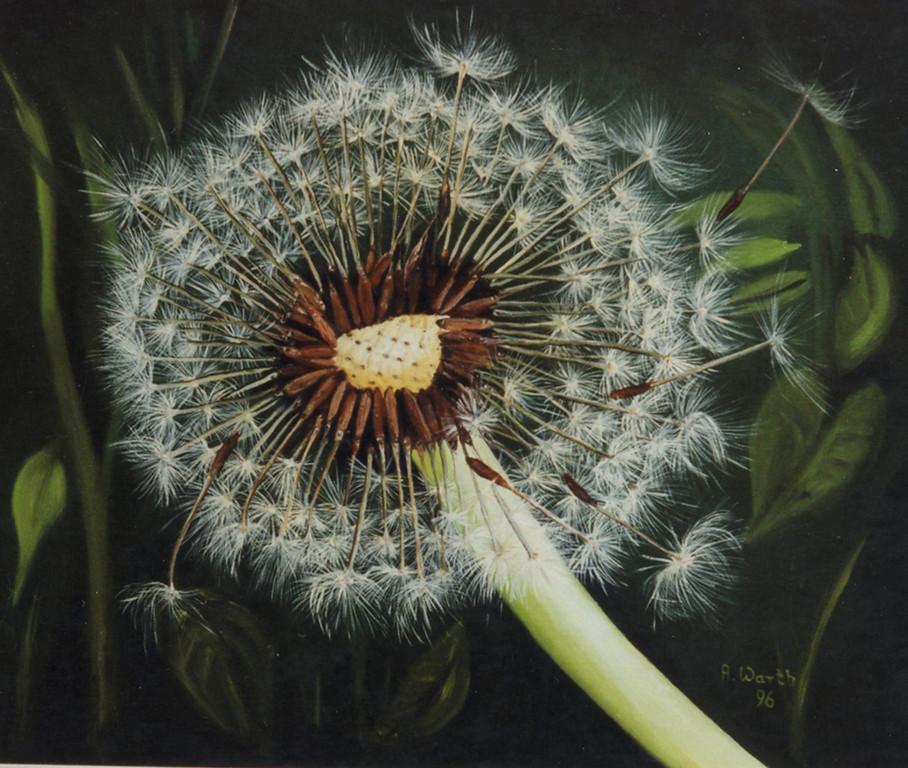 Pusteblume  1996    60 x 50 cm