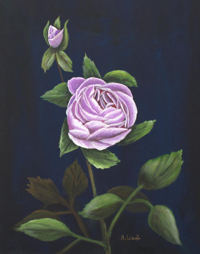 2018 Rose, flieder 30 x 39 cm auf Malkarton, Acryl