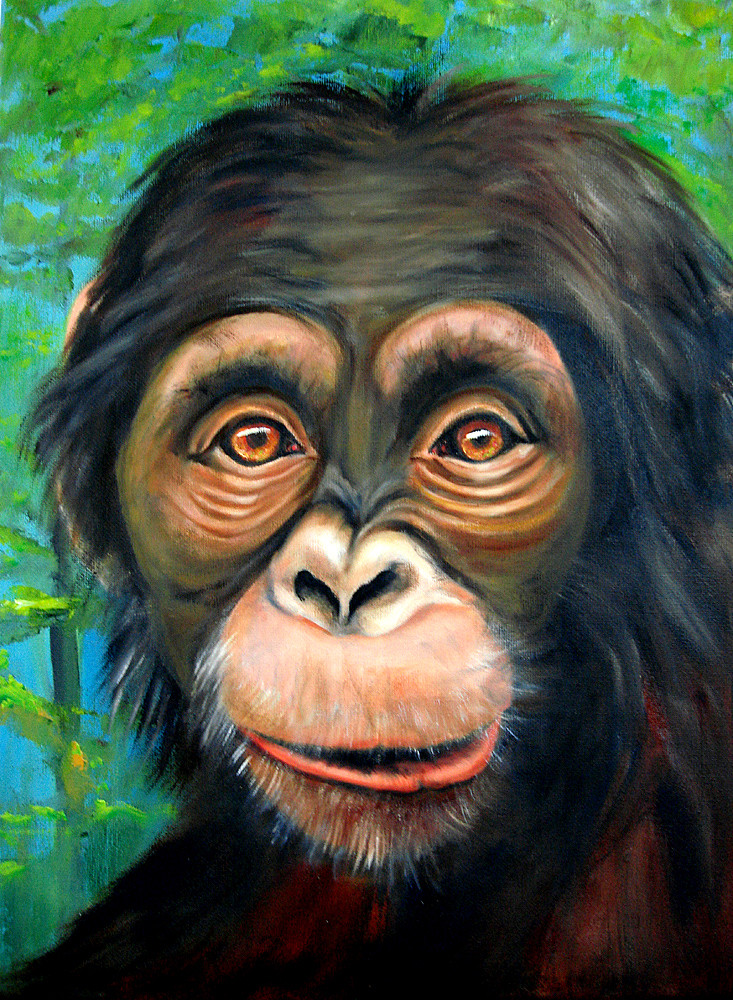Schimpanse 2013  Öl  30 x 40