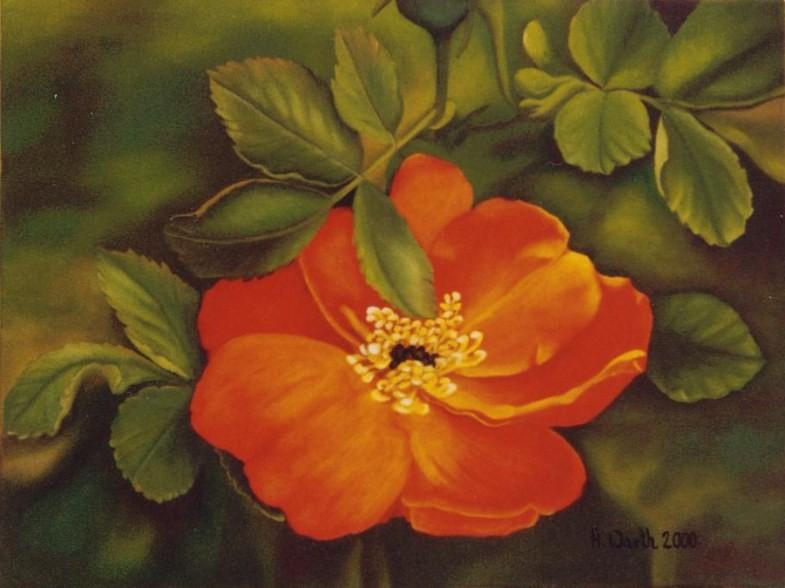 2000 Wildrose-moyesii   40 x 30 cm