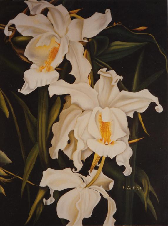 Schwanenorchis   1999     50 x 70 cm