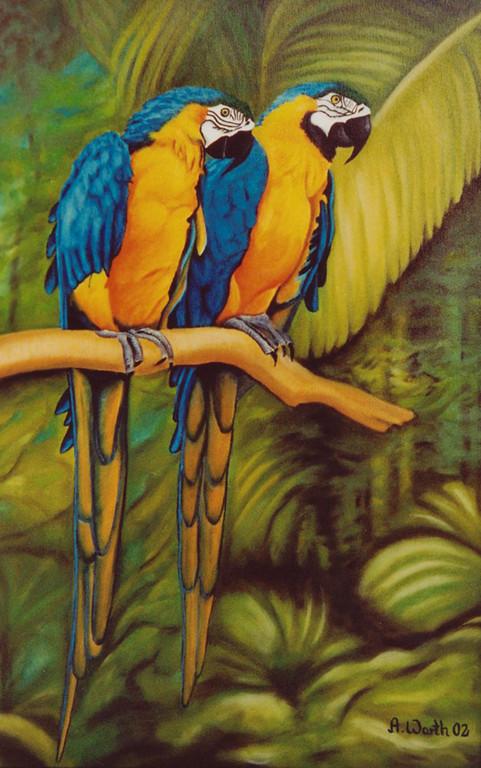 Ara Paar gelb/blau  2004  Öl   40 x 60 cm