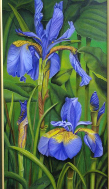 Iris   2003      40 x 80 cm