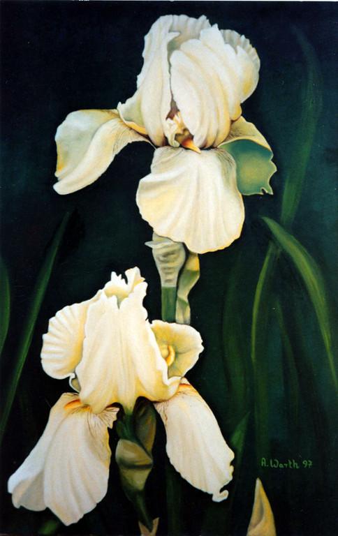 Schwertlilie   1997     50 x 70 cm