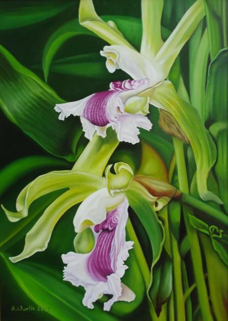 Orchidee-zygopetalum   2001     50 x 70 cm