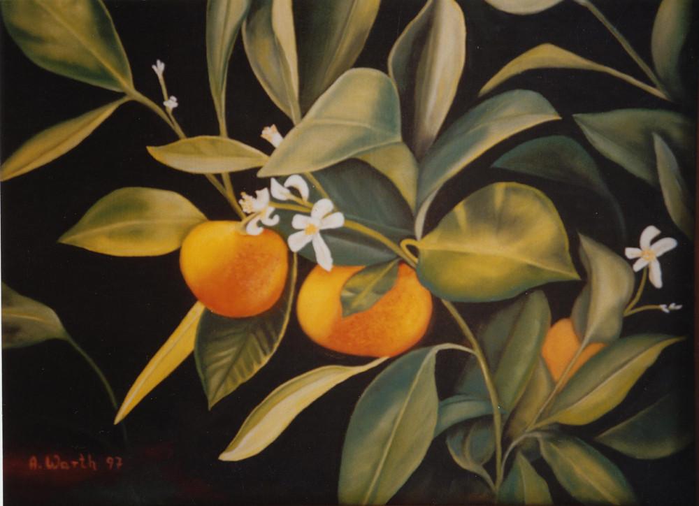Orangen     1997     50 x 40 cm
