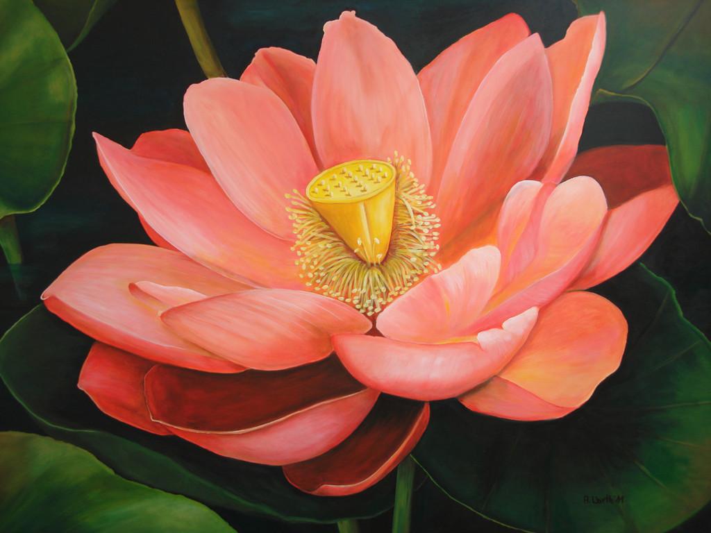 2011     Lotus    100 x 80 cm   Acryl