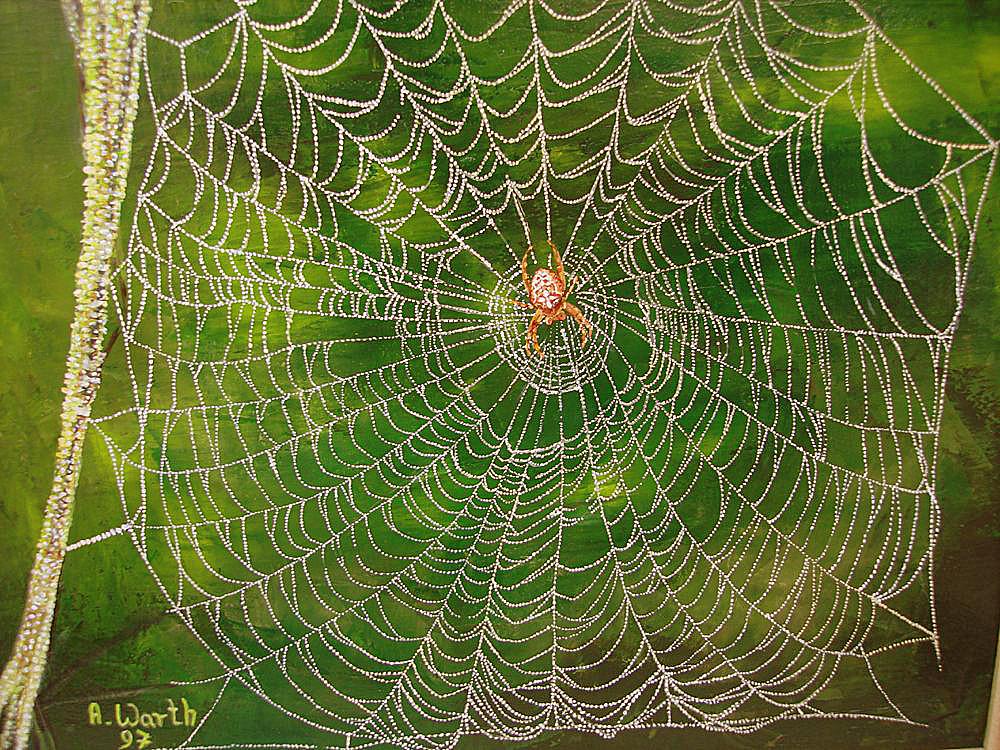 Kreuzspinnennetz