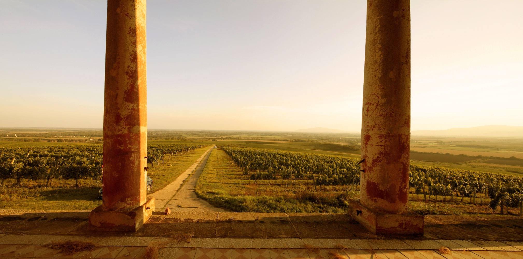 Blick auf die Weinberge vom Schloss aus
