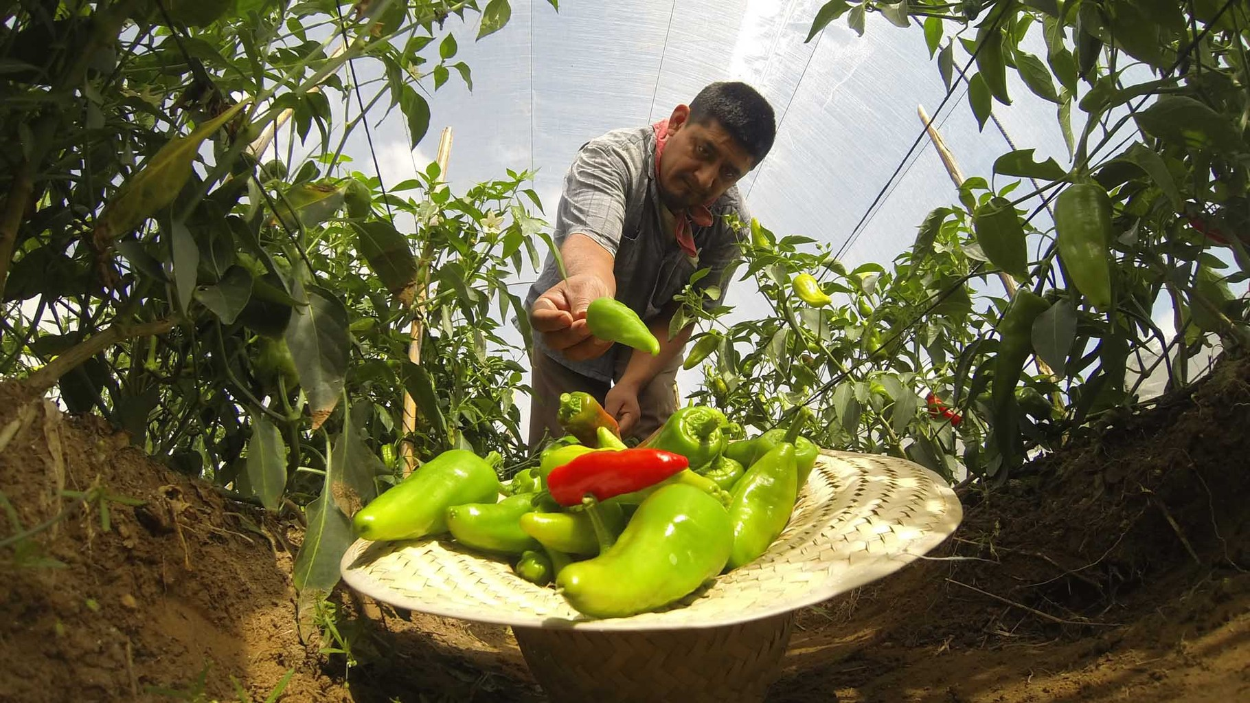 Salsa Macha de chiles chipotles - Macuilis: Mermeladas, Salsas & Conservas  Artesanales- Gourmet