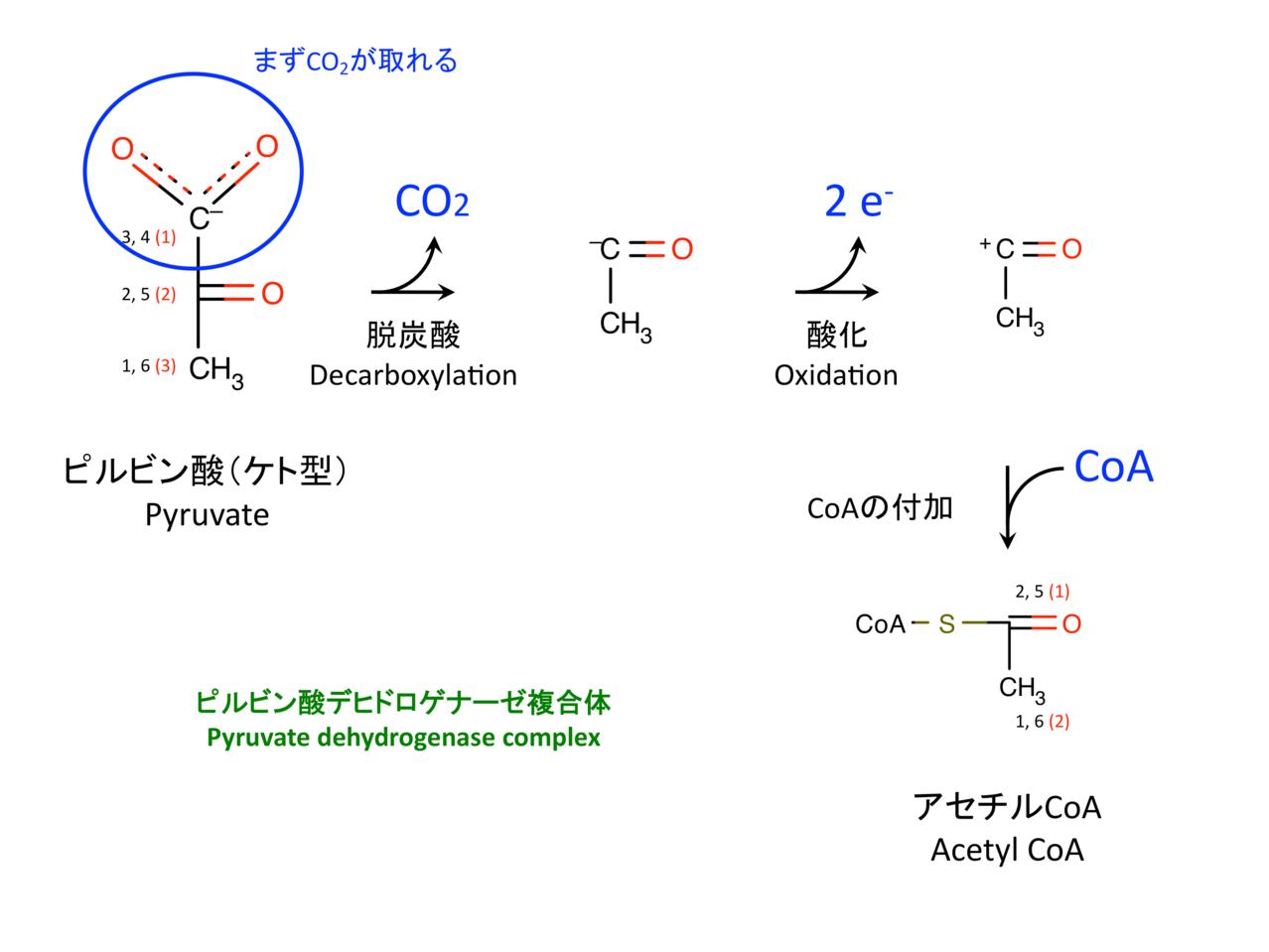 TCAサイクル(The citric acid c...
