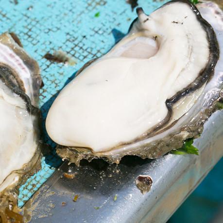 銀鮭養殖施設