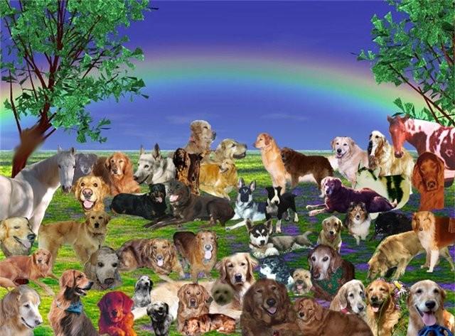 будет рай для собак картинки инцидент привёл