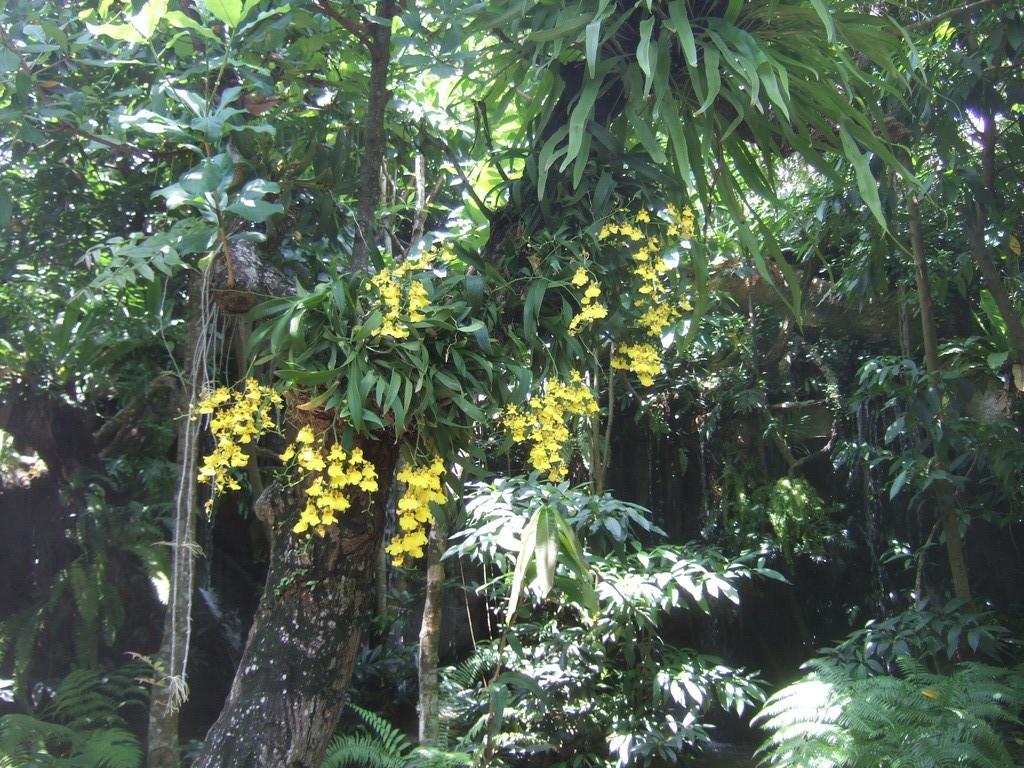Alte Baeume mit Orchideen geschmueckt