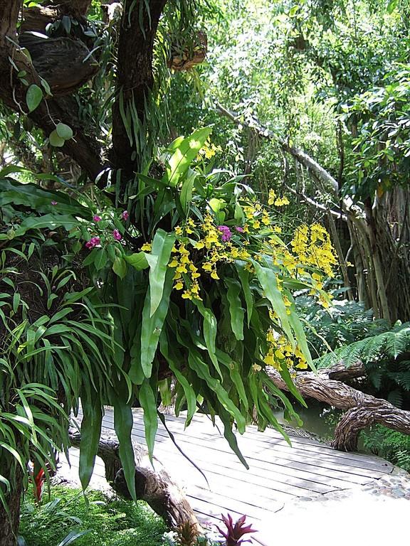 Nochmals Orchideen