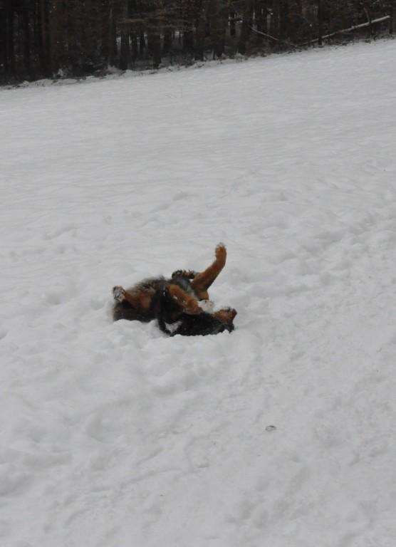 schneebaden lass ich mir auch mit so vielen hunden rundherum nicht nehmen