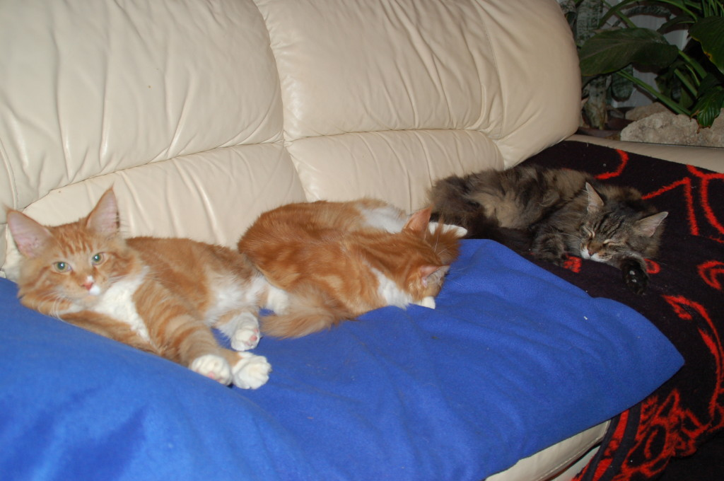 Es haben alle Platz auf dem Sofa
