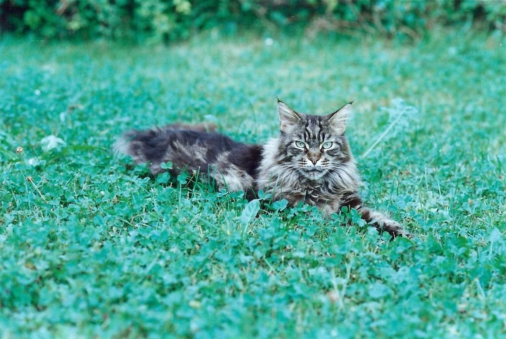 Es ist herrlich im Gras zu liegen