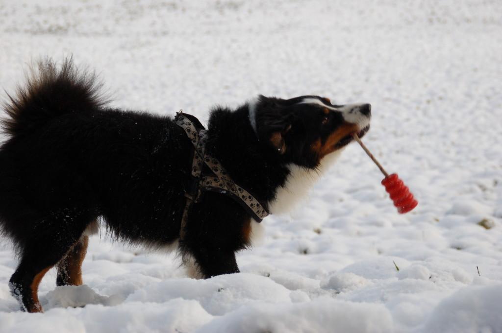 Spielen im Schnee