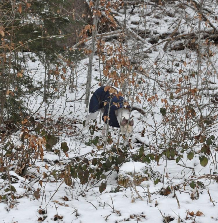 kurzer Ausflug in den Wald