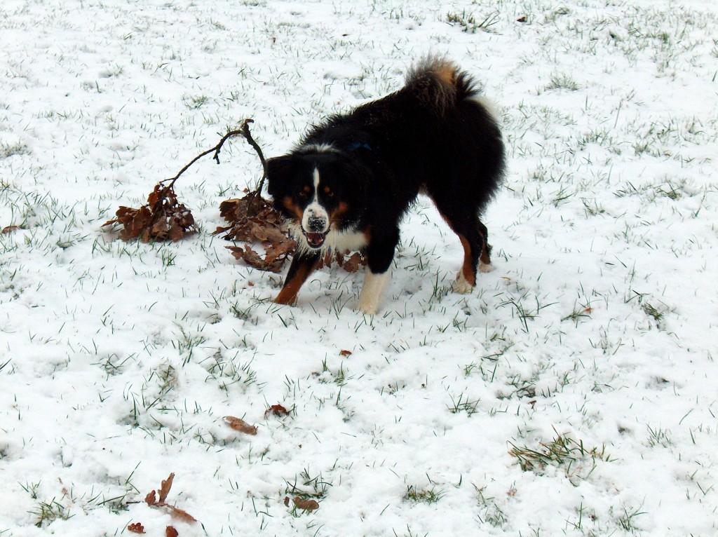 Schnee fand ich auch supertoll!