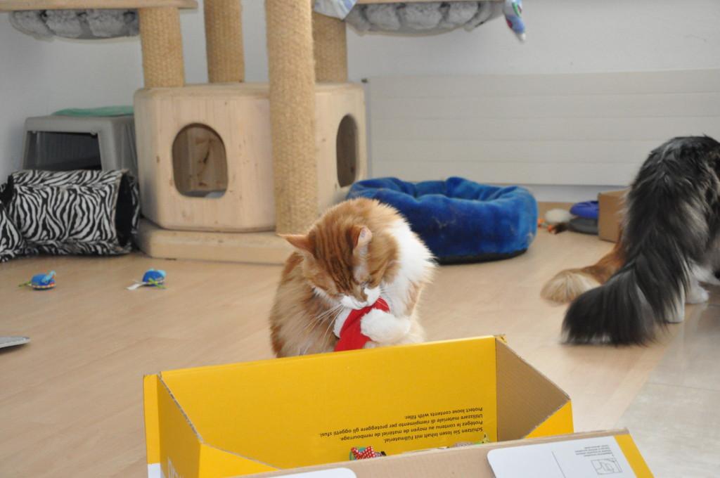 Der Nikolaus hat sogar seine Kappe bei uns vergessen! ;-)