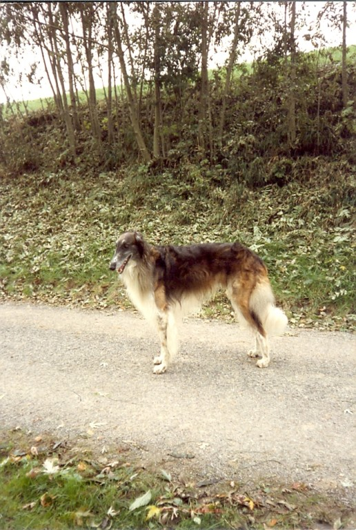 Abaschkan; der dritte Hund in unserer Familie