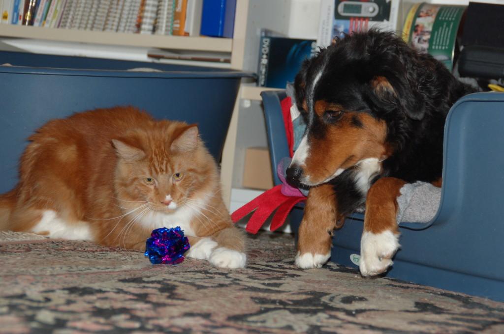 Schau mal Luna, magst mit mir spielen