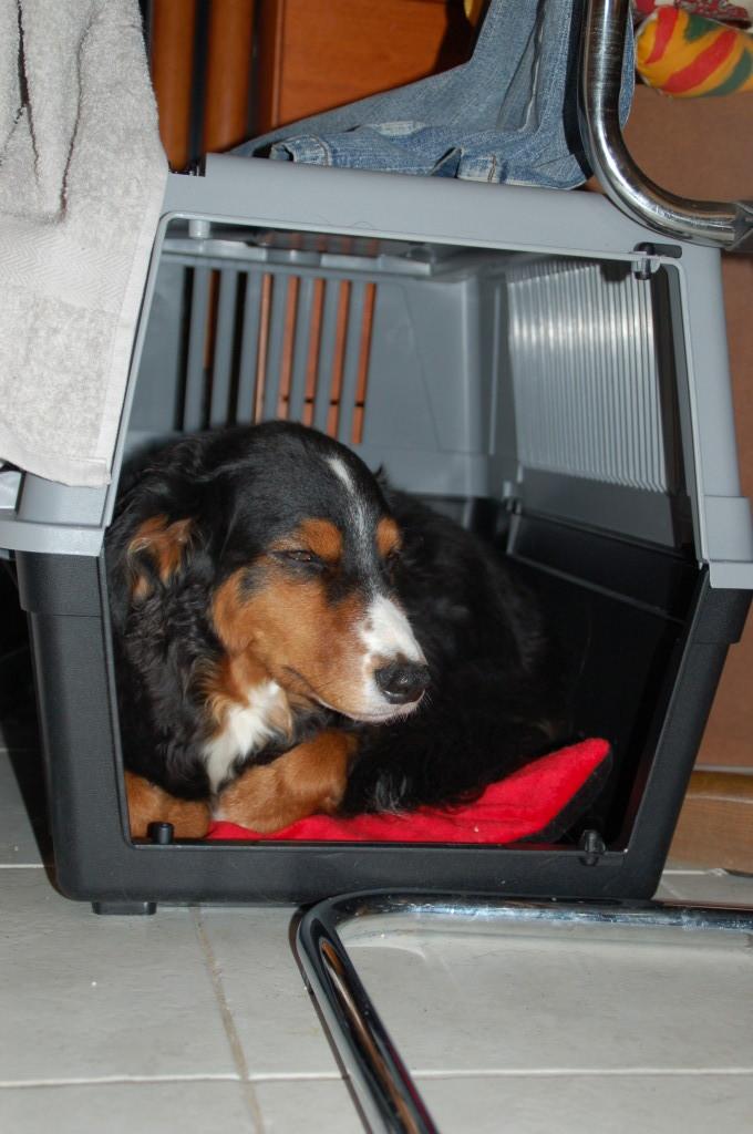 Luna's neuster Schlafplatz, die Katzentransportbox! :-D