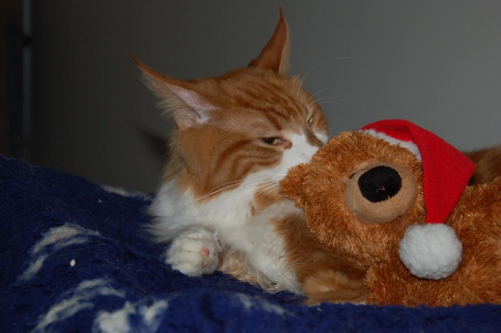 Soll ich Dir was verraten Teddy? Bald ist Weihnachten...