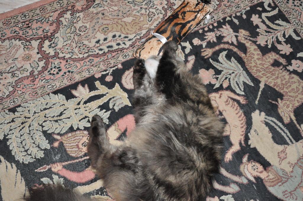 Und noch ne Catniprolle, da werde sogar ich wieder jung!! ;-)