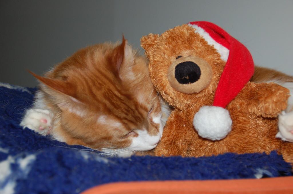 Da wird man ganz doll müde wenn man mit dem Teddy kuschelt... Gute Nacht!!