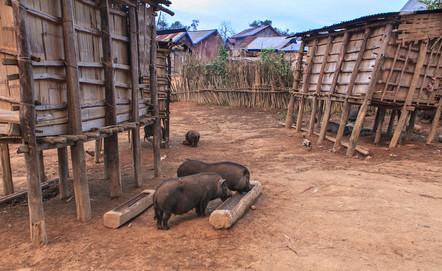 Akha Dorf im Norden Laos