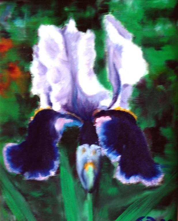 Schwertlilie blauweiß Öl  24x30 Privatbesitz