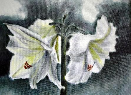 Amaryllis Acryl 30x49 2006