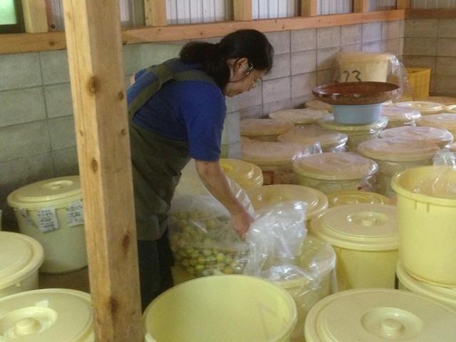 酢を入れた桶の中に塩をまぶした梅を入れます。