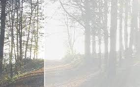 Wald neu
