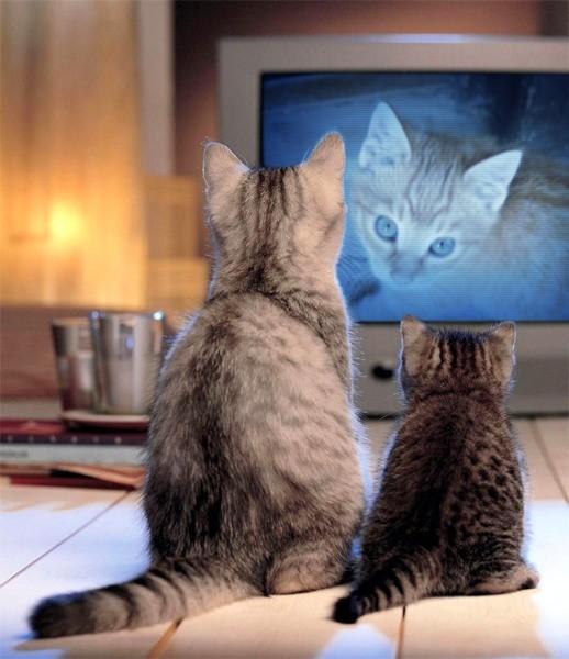Télé à chats