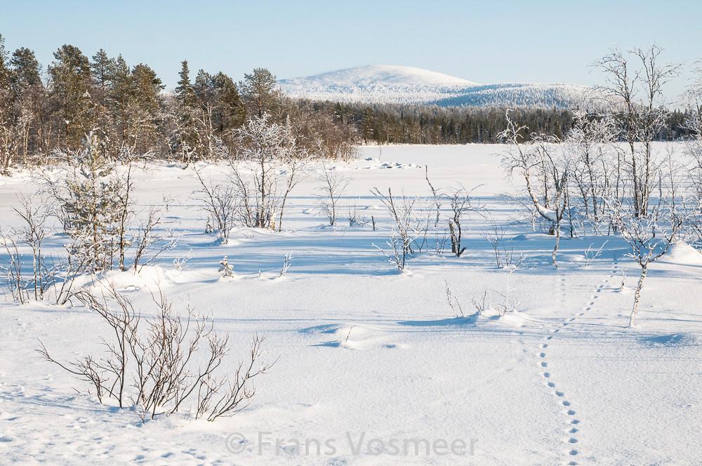 Anuntivuoma: Spuren im Schnee