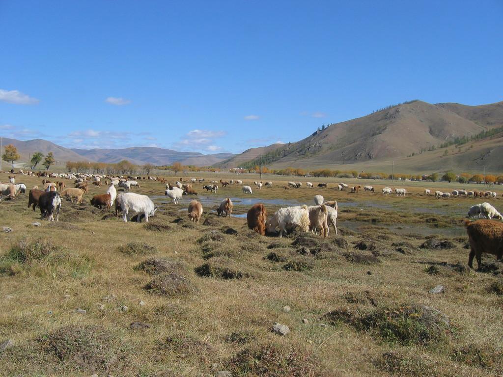 Gatschurt, 30 km von Ulanbaatar