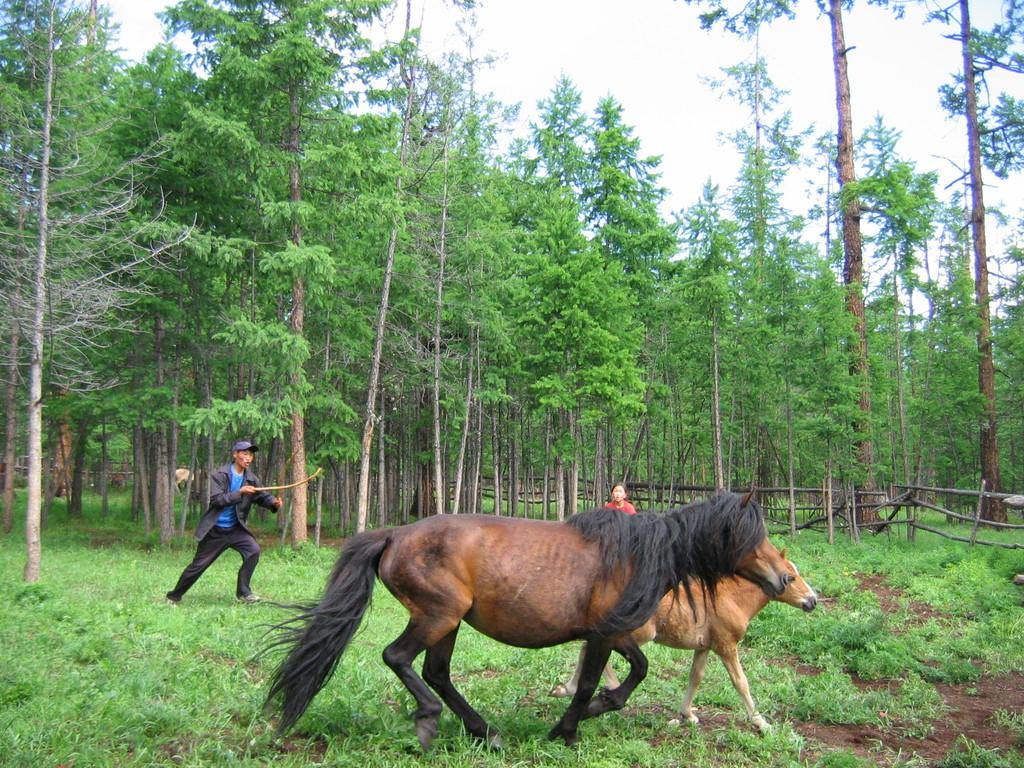 Pferdezüchter beim Chöwsgöl Nuur