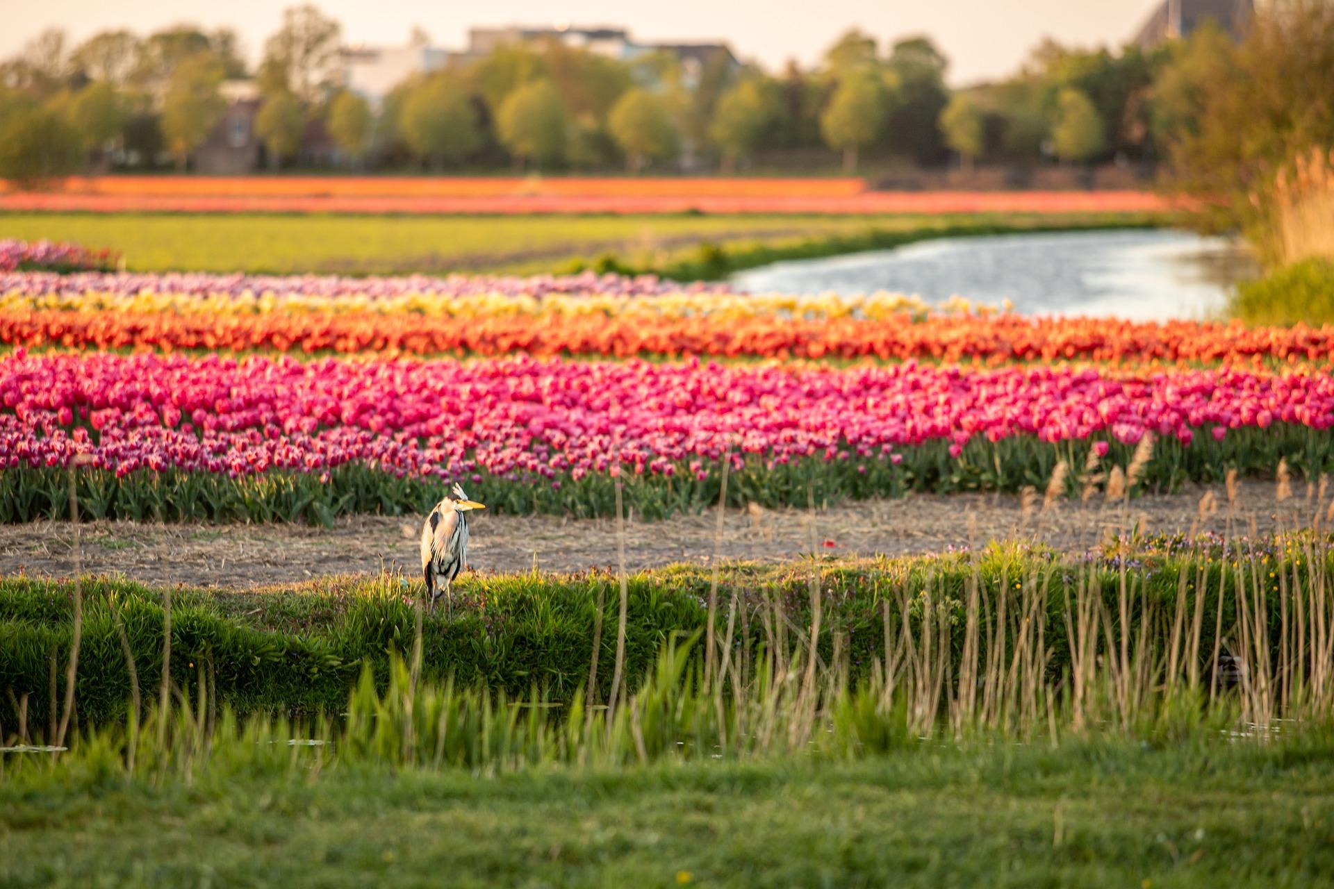 Nederland is aan het wenden ♥ Martha Krul ♥ Lichtwerkers Nederland