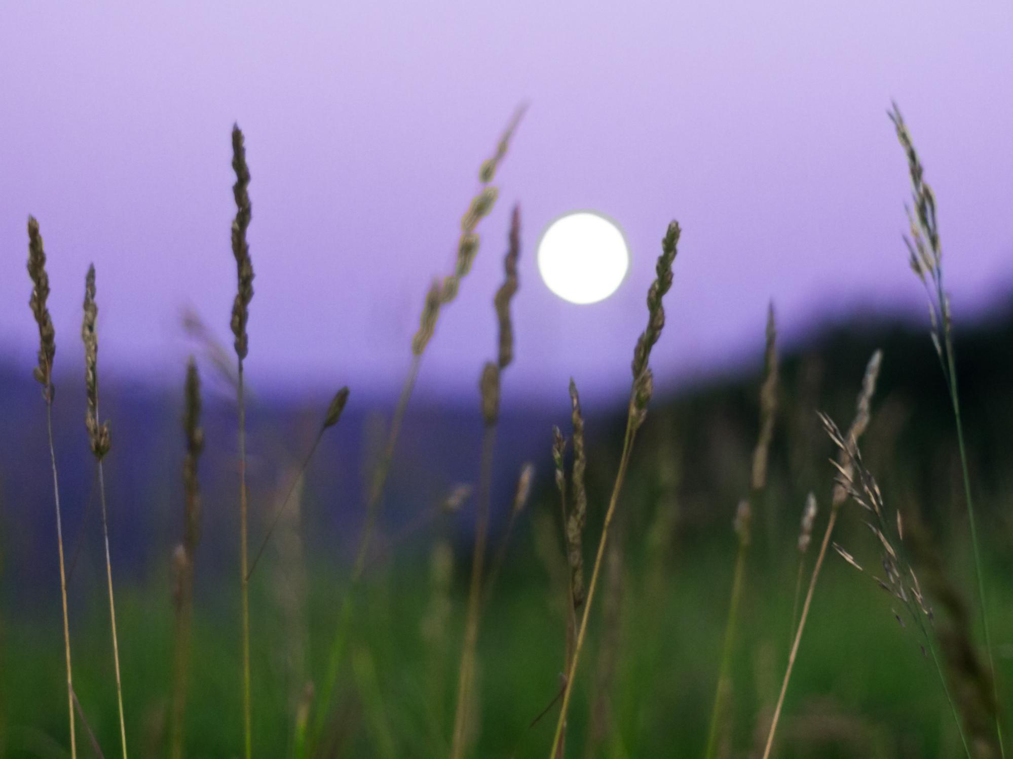 Geloven en leven in de nieuwe wereld • Volle maan in Waterman 24 juli 2021 ♥ Manuela van der Knaap ♥ Lichtwerkers Nederland