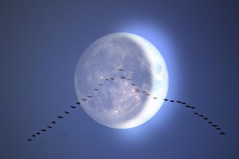 Nieuwe maan 13 januari 2021 ♥ Petra Stam ♥ Lichtwerkers Nederland