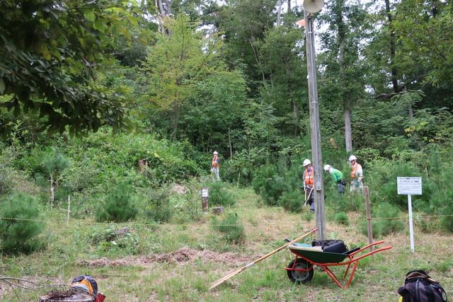 森創りプロジェクト植林地 1