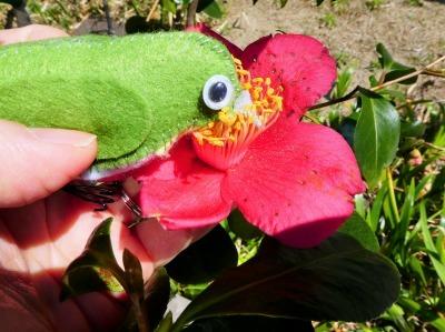 ツバキの花の蜜を吸うフェルトのメジロ