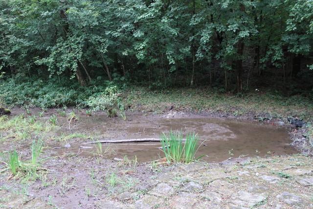 さんさくの路 池