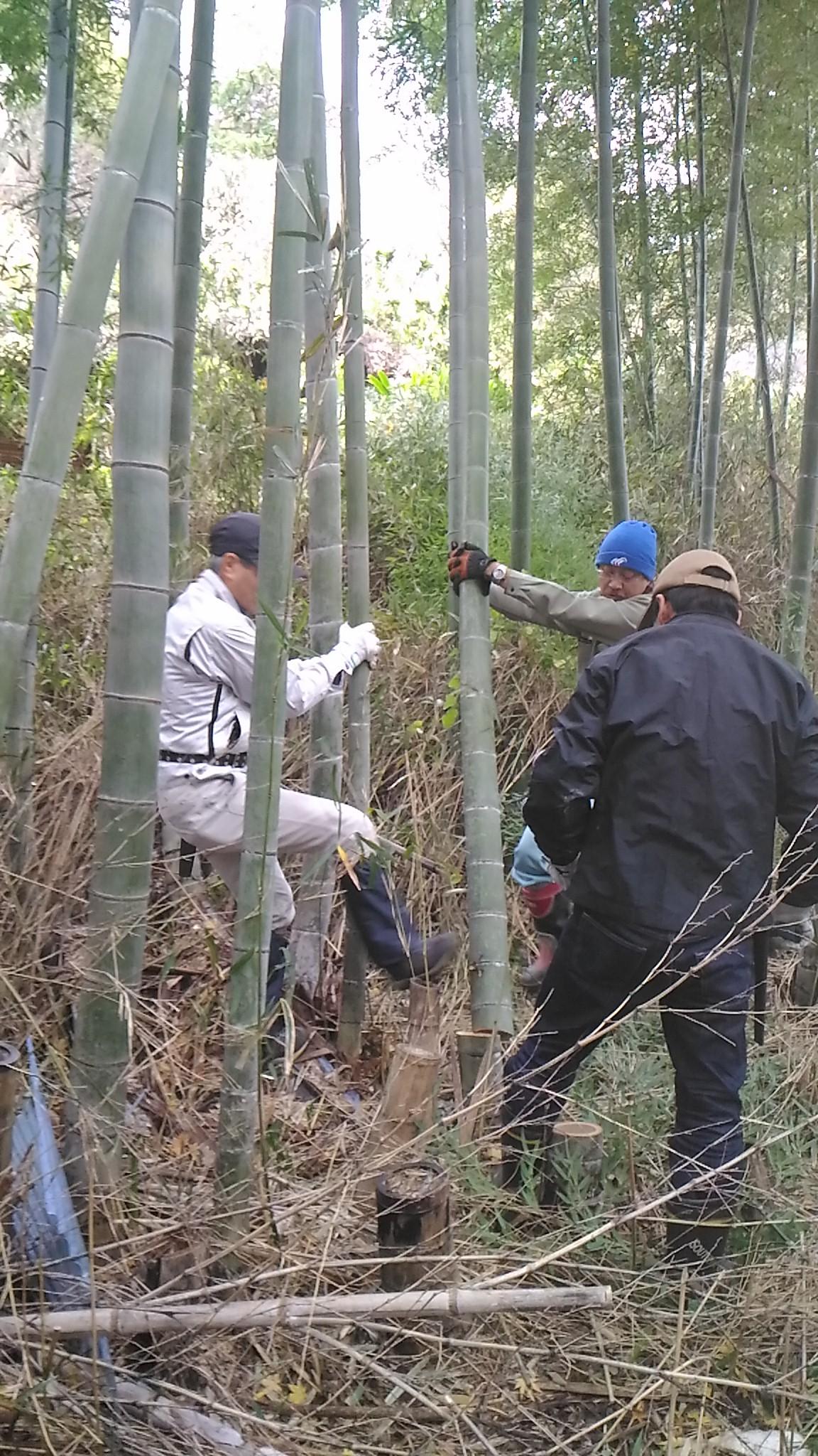 材料の竹の切り出し作業。10センチ程度の竹を6本程度切り出しました!